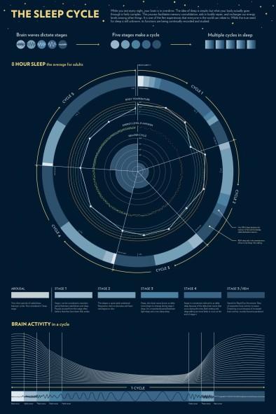 the-sleep-cycle_5314e06f3d6af_w1500